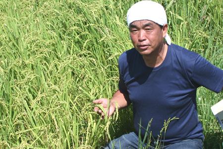 三重県多気町のふるさと納税 TC‐0411 特別栽培米の新米ミルキークイーン10kg (11月発送分)