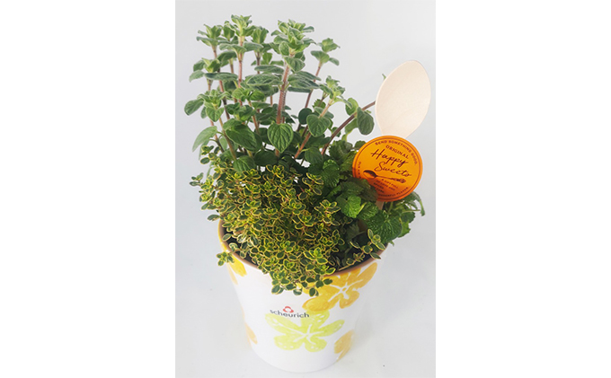【オンライン決済限定】母の日に!scoopハーブ寄せ植え お洒落陶器鉢入り5号