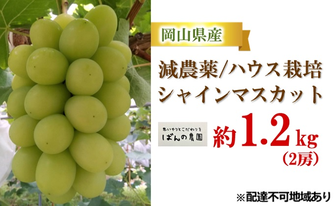 ばんの農園 減農薬/ハウス栽培の シャインマスカット 約1.2kg 2房
