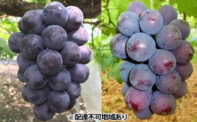 ひらた農園 岡山県産 黒系ぶどう 詰め合わせ 約2kg(3~5房)