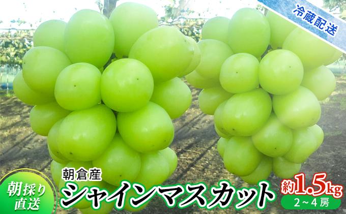 シャインマスカット(約1.5kg)<旬菜板