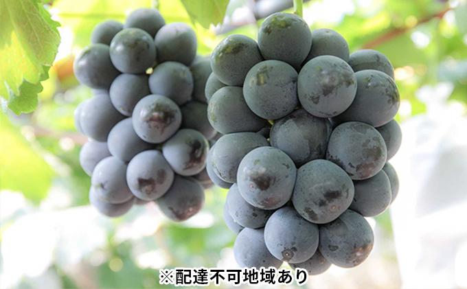 モリ旬 岡山県産 ピオーネ 1kg箱 約500g×2房
