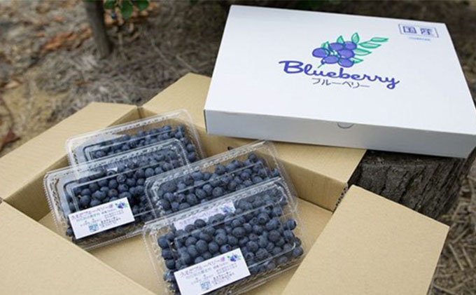 【厳選】うえだブルーベリー畑の手摘みブルー