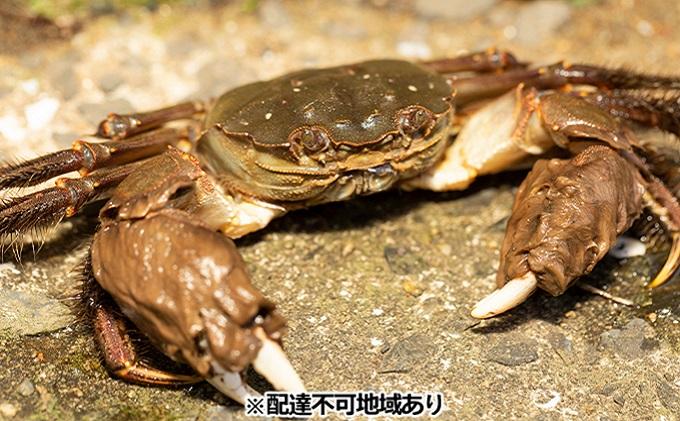 【先行予約】一級河川・江の川の恵み 島根県産 もくずがに 約1.2kg