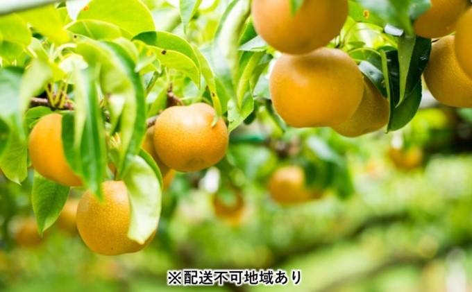 「先行予約」朝倉市産 豊水 梨 5kg 8