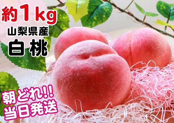 【産地直送】山梨県産  完熟桃 白桃系 約1kg(2~5玉)