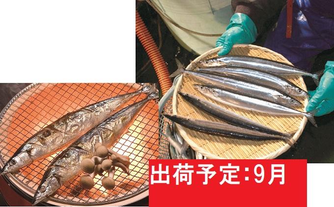 9月 大船渡網元直送 鮮さんま18尾