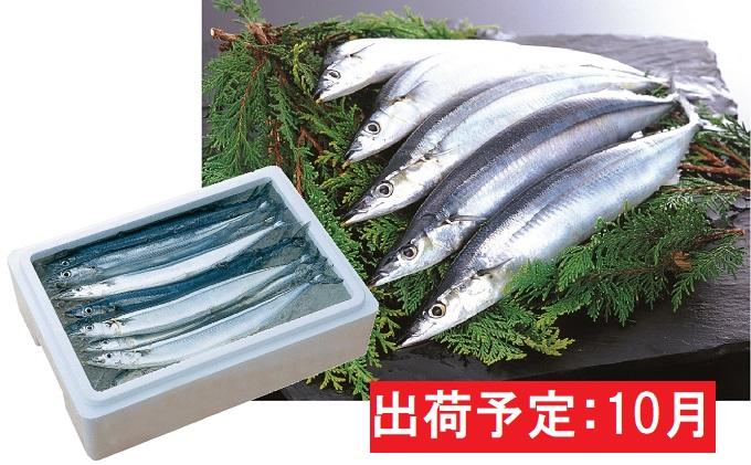 10月 大船渡網元直送 鮮さんま(大)10尾