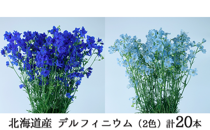 お花の産地から直送!北海道産デルフィニウム(2色)計20本入