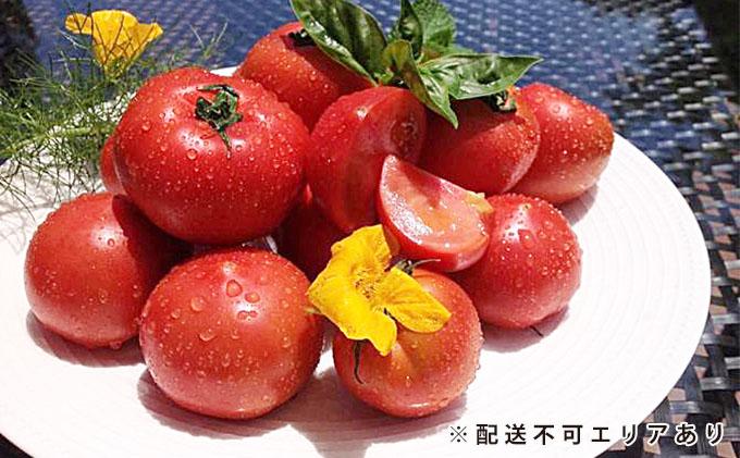 坪井農園の厳選!こだわりトマト(12~15個入)