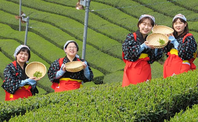 茶娘衣装を着て茶畑の中で撮影プラン~お土産付き~(大人ペアチケット)