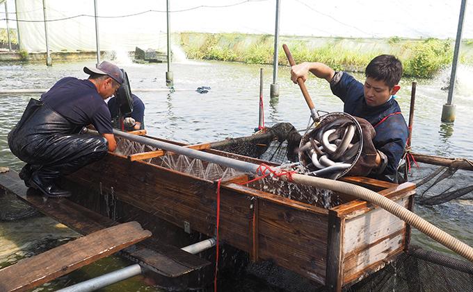 静岡県浜松市のふるさと納税 コロナ支援品 浜名湖産鰻蒲焼約90g×3本