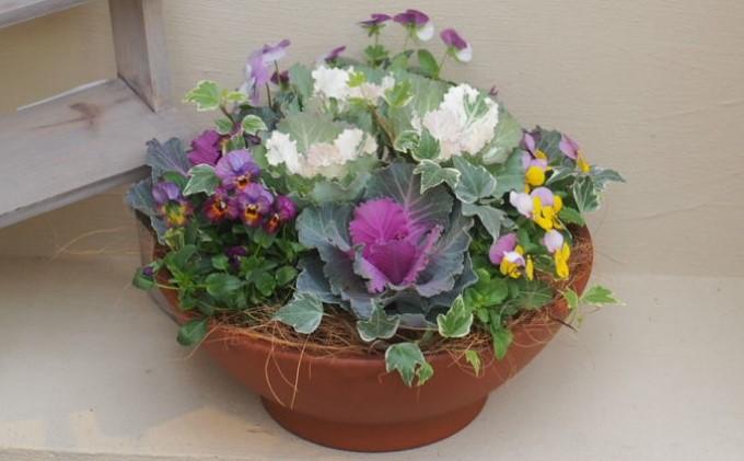 まるでお花のケーキ!葉ボタンの寄せ植え