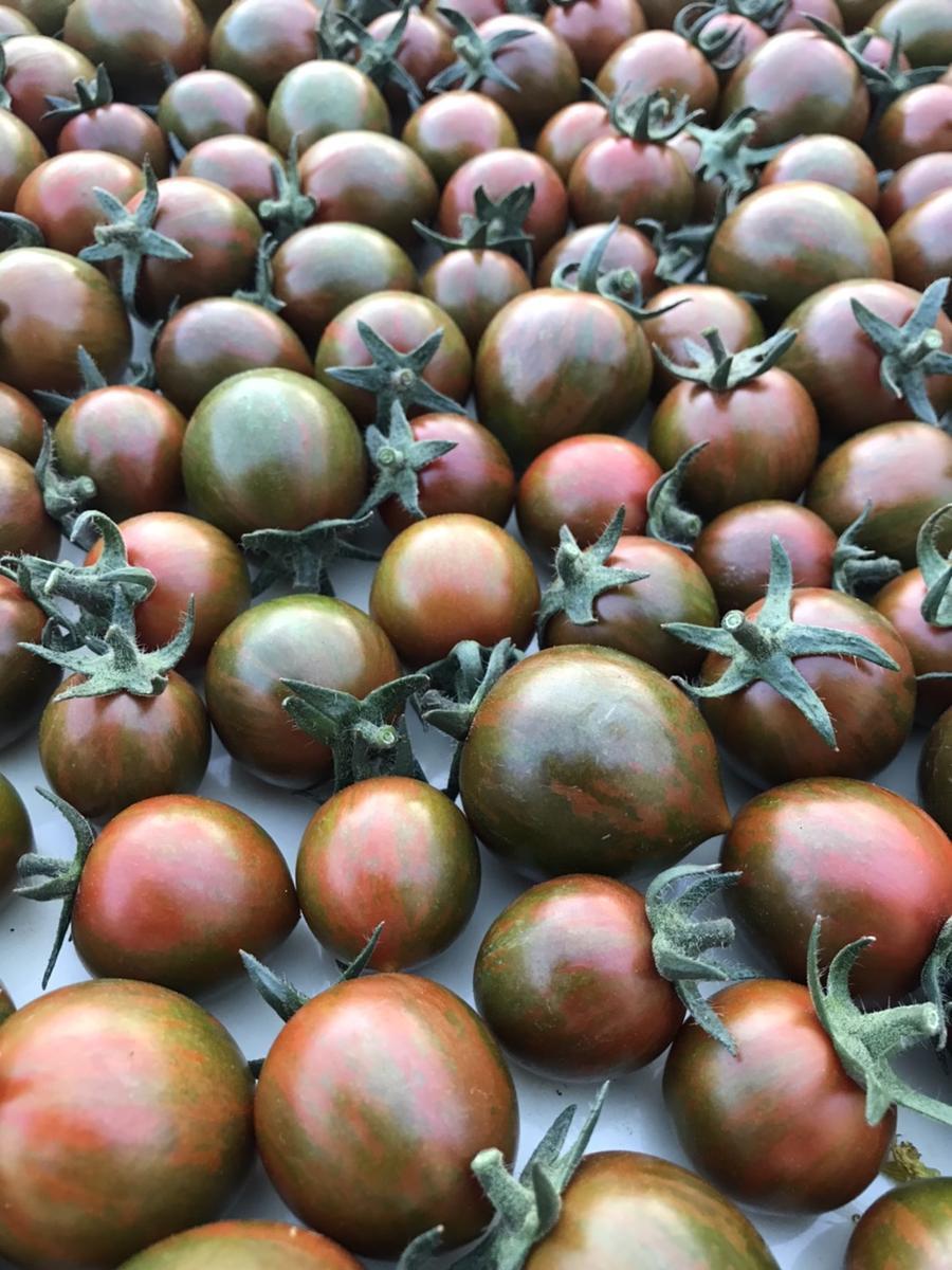 三重県多気町のふるさと納税 PF-05 完熟トマトの贅沢ケチャップ