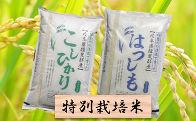 特別栽培米★白米10kg【ハツシモ・コシヒカリ】