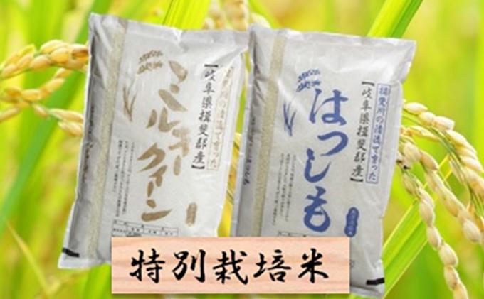 特別栽培米★精米20kg(分搗き可)または玄米22kg【ミルキークイーン・ハツシモ】